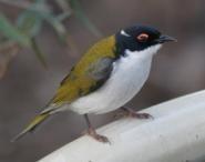 WREN Part 2 Bird Observing