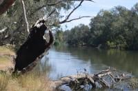 Wodonga Creek Grade 2 morning walk